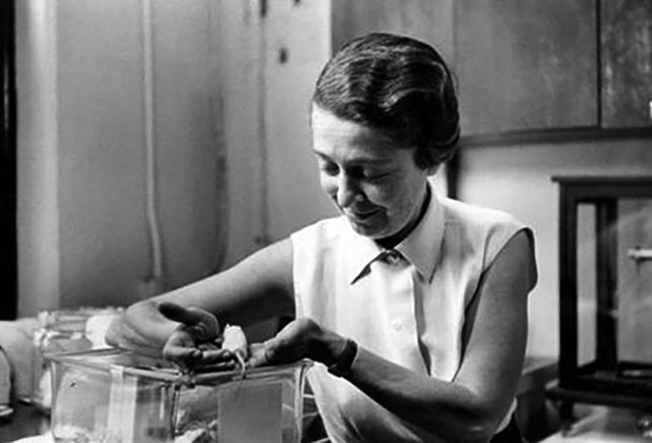 Rita Levi-Montalcini en laboratoire